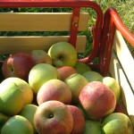 "The Expected Fall ""Apple Picking"" Post…plus!!"