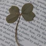 4 leaf clover on page