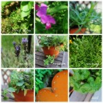 herb collage