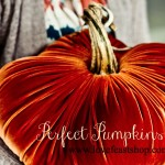Celebrating Velvet Pumpkin Season With You!